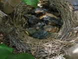 <h5>Die Federn wachsen rasant.</h5>