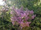<h5>Aber seine Blüten sind schon eines genaueren Hinsehens wert.</h5>
