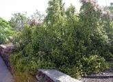 <h5>Der botanische Name dieses Busches ist uns leider nicht bekannt.</h5>
