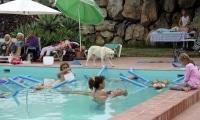 <h5>Auch die Zaungäste waren vom Treiben im Pool fasziniert.</h5>
