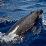 delfines02
